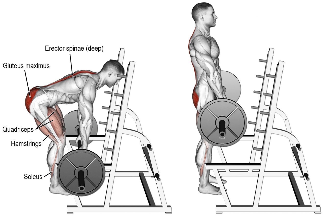 What are Rack Pulls and How Effective Are They? Gain Back Mass